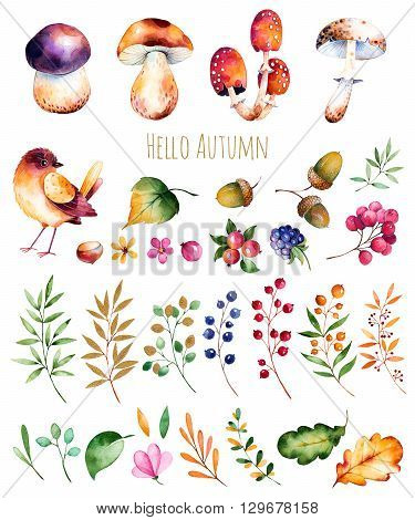 Bright collection with autumn leaves, flowers, branches, berries, acorns, blackberries, mushrooms, chestnut and little bird