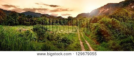 Beautiful evening landscape in sunset time path in the cloud field forest and mountains at Khao Sok National Park Surat Thani Province Thailand. Hiking concept. Soft focus.