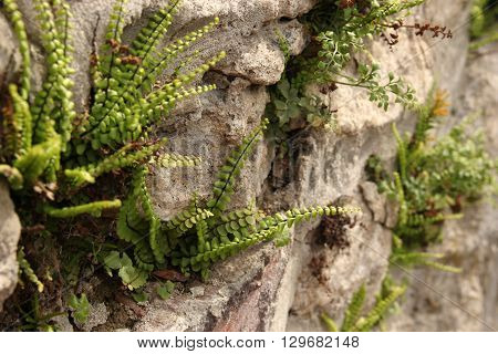 Green grass growing on the mountain hill. Natural background