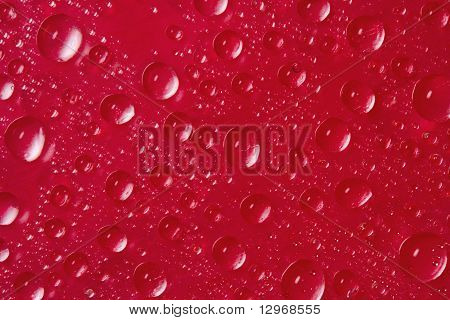 drops of water on red