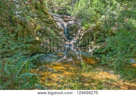 A small waterfall and swimming pool a short walk from Jubilee Creek a picnic spot in the Knysna Forest near Millwood