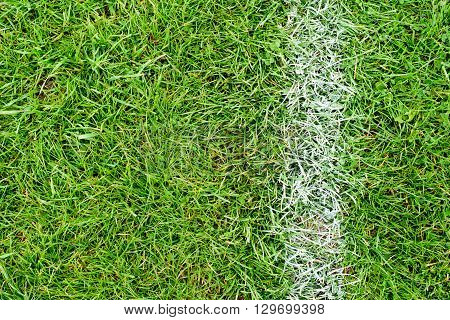 White Chalk Line On Green Grass