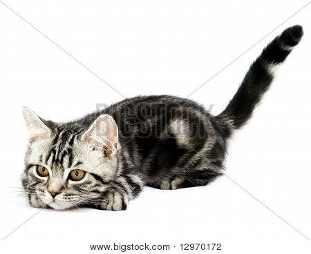 Kitten Hunting