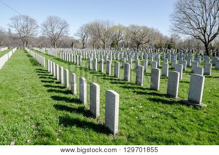 Rows Of Anonymous Military Headstones In A Cemetary