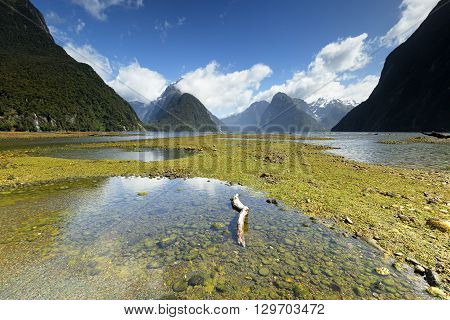 Beautiful and vivid landscape of Milford Sound.