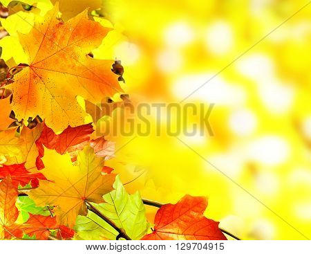 Autumn foliage. Golden Autumn. colorful autumn foliage