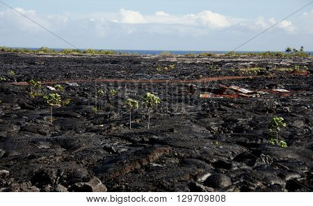 Lava Flow Field Near Kalapana
