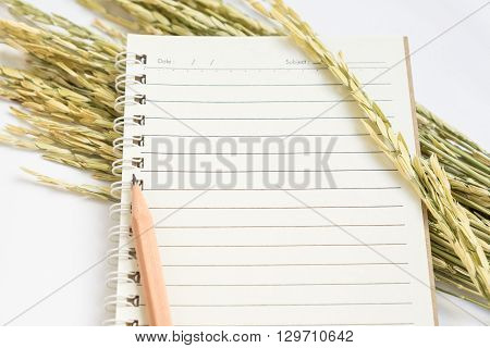 Open spiral notebook with brown pencil and dried paddy rice on white background