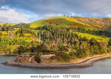 Rural Scene and Sheep Farm near Dunedin at Otago Region Southern island New Zealand