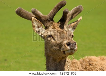 Young deer in a pasture near the forest