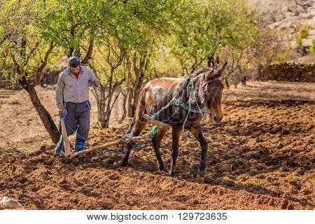 TALIOUINE MOROCCO - OCTOBER 26 2015: Farmer working a small plot of land near the town of Taliouine in the Anti-Atlas mountains.