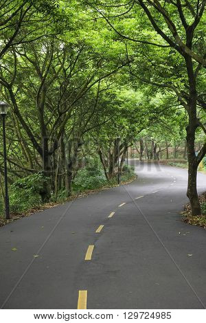 curved road with trees on both sides in the morning