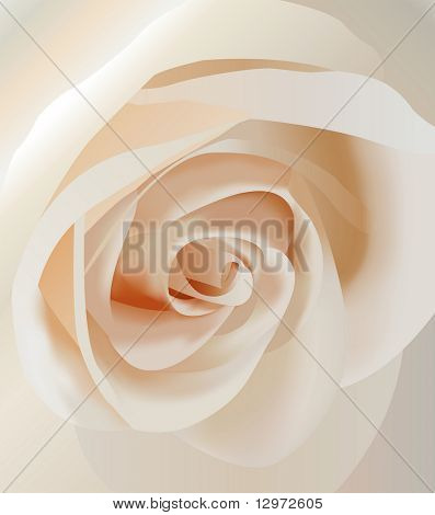 Vector blanco rosa closeup