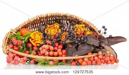 Rowan, rosehips, autumn flowers and berries in a basket isolated on white background