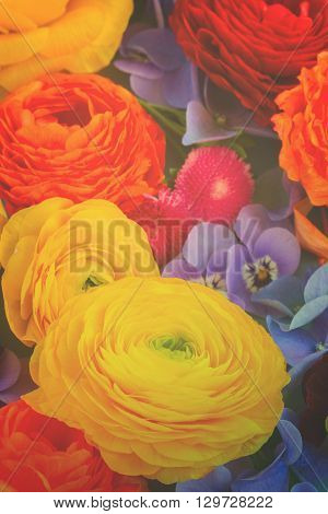 vivid Fresh  Flowers Background - ranunculus, pansies and hortensia, retro toned