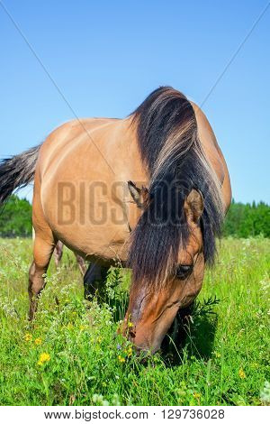 Brown horse in a pasture of green grass