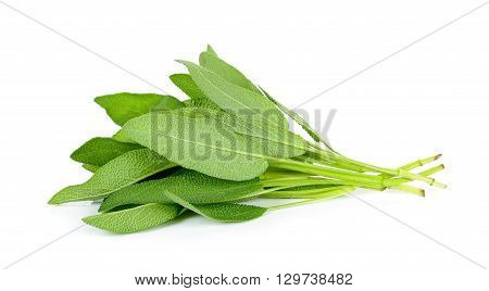 Sage Leaves Isolated On The White Background
