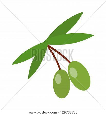 Olive branch with green olives isolated. Green olive branch vector and nature olive branch. Organic oil fruit olive branch and tree plant fresh natural olive branch. Design vegetable ingredient food.