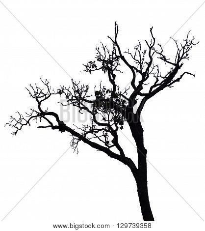 Isolated black deciduous tree on white background