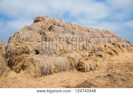 Straw Haystacks Piled Together