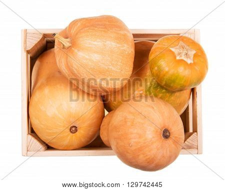 Ripe pumpkins of different shapes in a wooden box isolated on white background