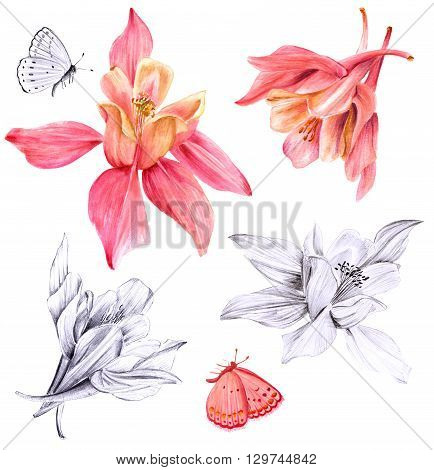 A set of watercolor drawings and pencil sketches of fuchsia flowers and butterflies a collection of botanical design elements on white background
