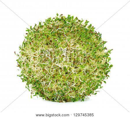 Alfalfa Sprouts On White Background