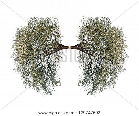 tree lungs isolated on white. Close up