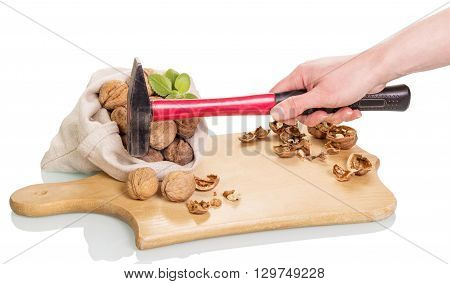 Man's hand holding a hammer to extract the kernel of walnut isolated on white background.