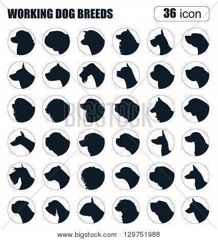 Dog breeds. Working (watching) dog set icon. Flat style. Vector illustration
