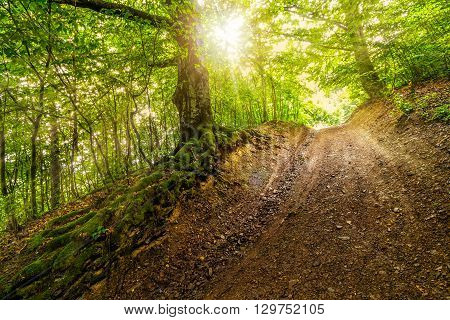 Path In To Deep Ancient Forest