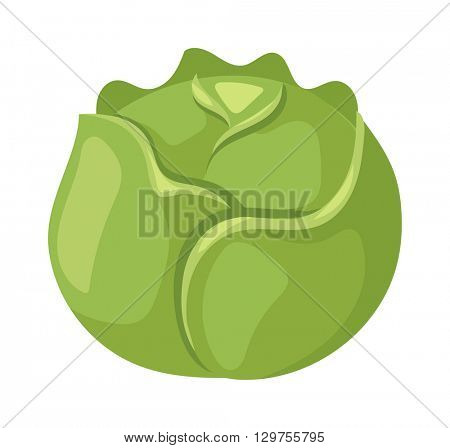 Brussels sprouts vector illustration.