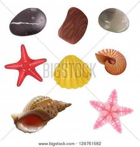 Sea Stones Sea Shells Starfish. Isolated Realistic Objects. Vector Set Icons.