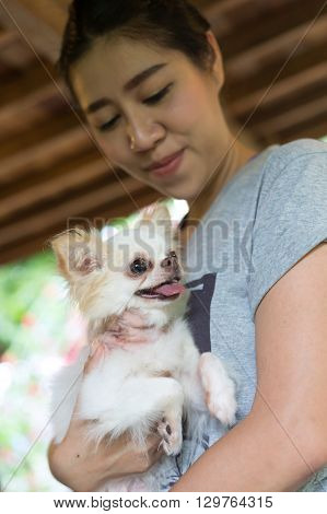 chihuahua small dog happy smile pet wounded on neck