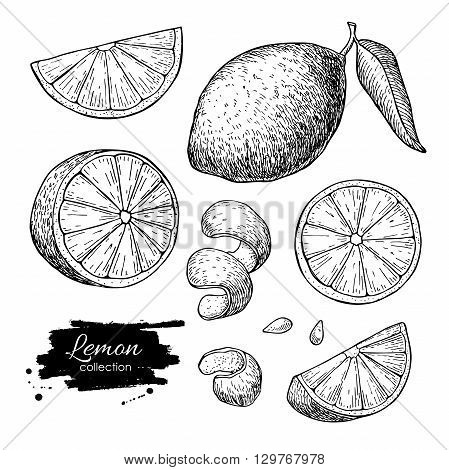 Vector hand drawn lime or lemon set. Whole lemon sliced pieces half leafe and seed sketch. Tropical summer fruit engraved style illustration. Detailed citrus drawing.