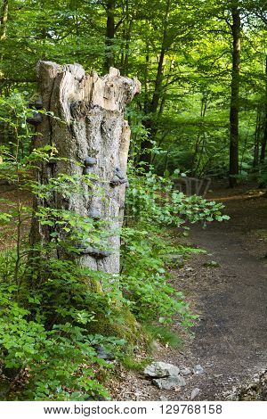 Tree Fungus And Forest Path