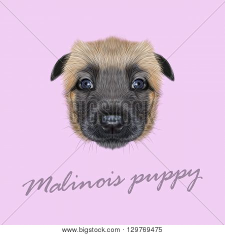 Vector Illustrated Portrait of Malinois dog. Cute face of Belgian Shepherd puppy on pink background.