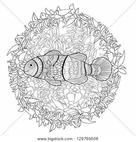 Clownfish with high details. Adult antistress coloring page. Black white hand drawn doodle oceanic animal. Sketch for tattoo, poster, print, t-shirt in zen tangle style. Vector illustration.