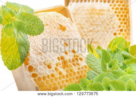 Honeycomb and mint on a white background