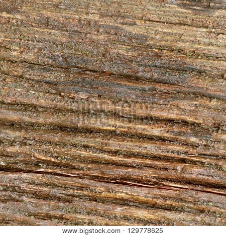 Old oak texture, old oak wooden background.