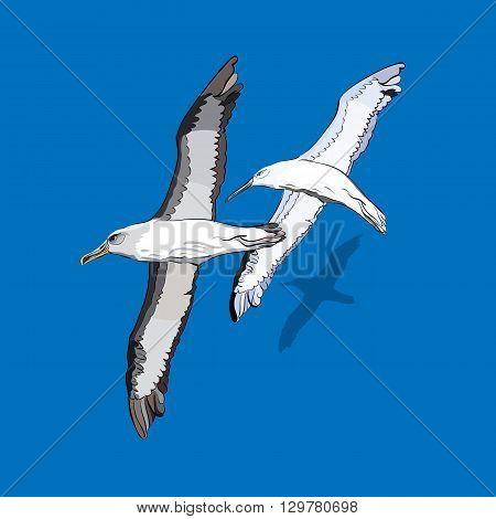 vector illustration of a flock of birds
