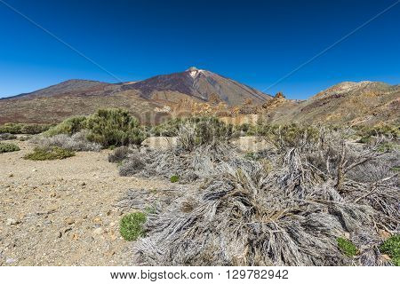 Flat desert landscape in the Caldera of the volcano Teide on Tenerife is not rich in vegetation, even in winter. Spain.