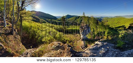 Spring forest mountain panorama landscape with sun.