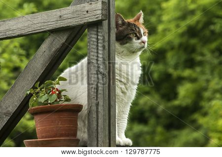 Cat sitting on rustic porch in garden