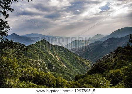 View To Forest Of Sequoia National Park