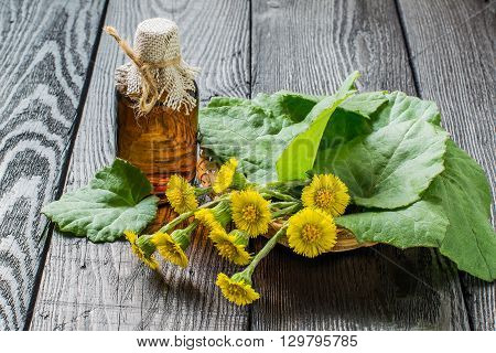 Medicinal plant - coltsfoot (Tussilago farfara). The infusion leaves and flowers in a basket
