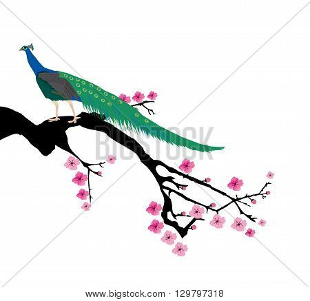 vector illustration of a cherry blossom branch with peacock
