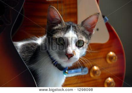 Cat_0951