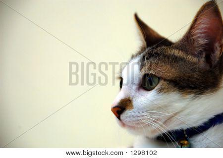 Cat_1116