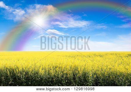 Yellow Field Against Rainbow Sky And Sun Burst